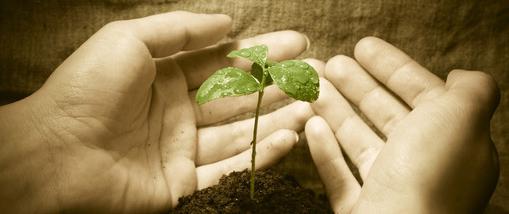epargne-plante1